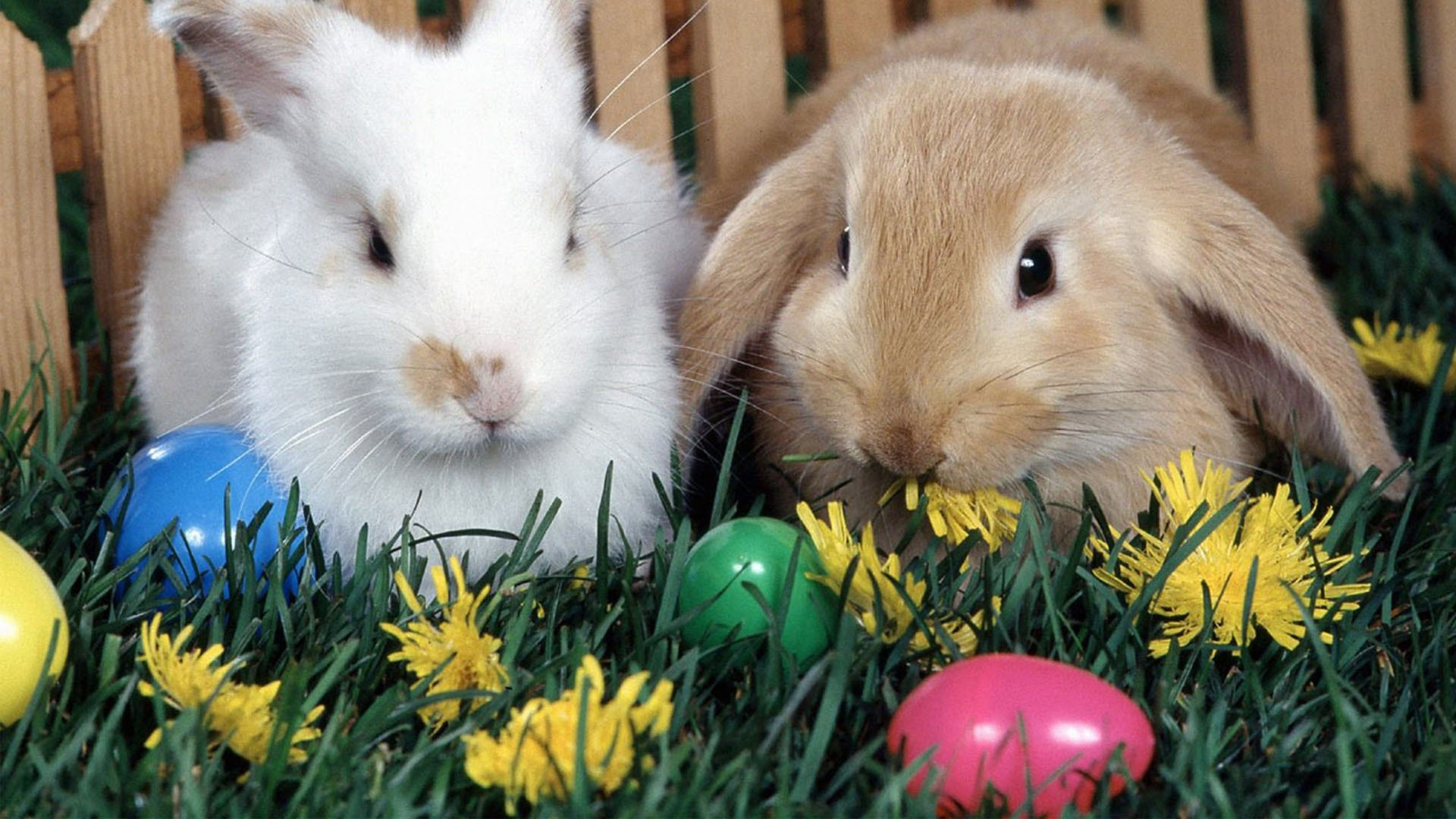 easter-bunny-images